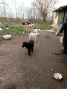 2 Hunde brauchen unsere Hilfe_6