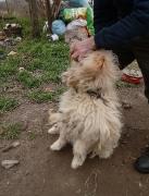 2 Hunde brauchen unsere Hilfe_7
