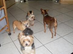 Hunde Zuhause 2013