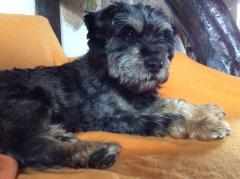Masol jetzt Lucy zuhause