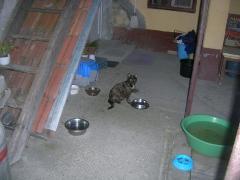 Katzenhilfe im August 2019 bei Erzsike_5