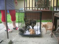 Katzenhilfe im August 2019 bei Erzsike_7