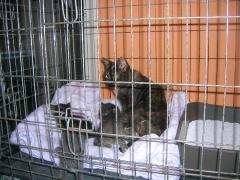 Katzenhilfe im August 2019 bei Erzsike_8