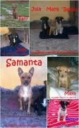 Samanta mit Beppo, Bany, Jula und Maya