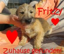 Fritzy hat ein Zuhause!