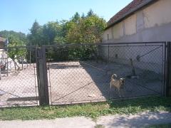 Die beiden Kettenhunde ohne Waser_1