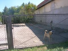 Die beiden Kettenhunde ohne Waser_2