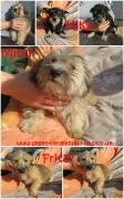 Fritzy, Mitzy und Kiky sind in Deutschland