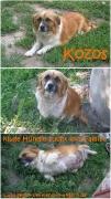 Kozos: kluge Hündin sucht ihre Familie