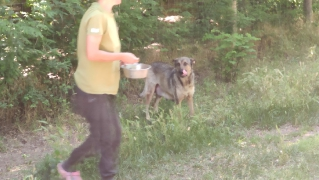 2. Fall: Schäferhund-Mama