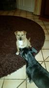 Cabby und Kumpel