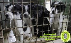 Spendenaktion Bayer Foresto