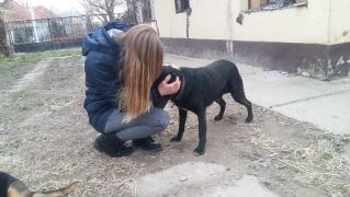 Annas Spendenfahrt nach Ungarn_2