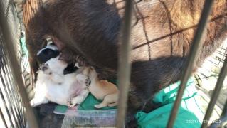 Mama und die 5 Welpen 2