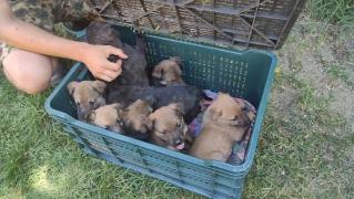 2. Fall: Die 8 Schäferhund-Welpen werden eingeladen